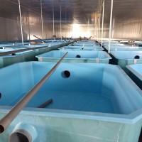 盐城玻璃钢鱼池鱼缸养殖玻璃钢水槽可定制玻璃钢水产孵化池